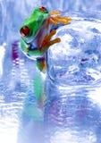 Rana fredda Immagine Stock