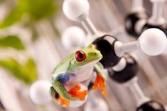 Rana in laboratorio fotografia stock libera da diritti