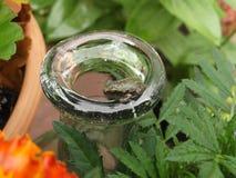 Rana minuscola su una bottiglia Fotografia Stock Libera da Diritti