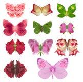 Różana motylia kolekcja Obrazy Stock