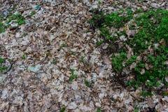 Rana nella fine della foresta su Immagine Stock Libera da Diritti