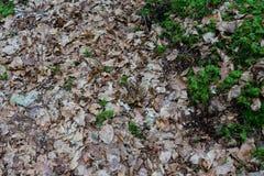 Rana nella fine della foresta su Immagine Stock