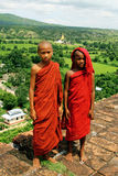 Rana pescatrice della Birmania Immagine Stock Libera da Diritti