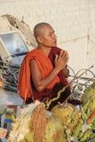 Rana pescatrice di preghiera Fotografia Stock