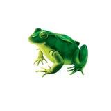Rana verde con los puntos, sapo manchado stock de ilustración