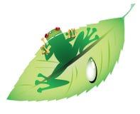 Rana verde en una hoja Imágenes de archivo libres de regalías