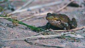 Rana verde que se sienta en una orilla del río y un salto en agua Cámara lenta