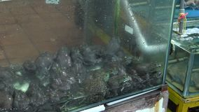 ranas vivas 4K en venta y cocinando en el mercado de la noche de la calle Tamsui metrajes