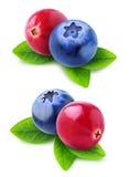 Сranberry blueberry mix Stock Photos