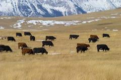 Ranch 1 de Livingston image libre de droits