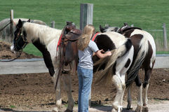 On the ranch. Woman combing a horses tail Stock Photography