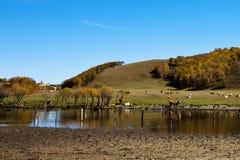 Ranch in Bashang Grassland,Inner Mongolia,china. Stock Image