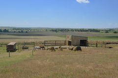 Ranch corral with horses Stock Image