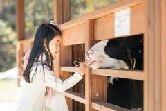 Ranch d'alimentazione del vitello della ragazza felice in Corea del Sud Immagini Stock Libere da Diritti