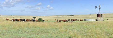 Ranch de bétail Photos libres de droits