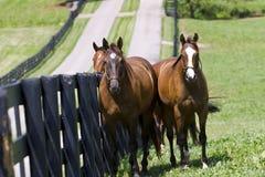 Ranch de cheval images libres de droits