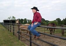 Ranch de cheval Image libre de droits