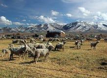 Ranch de moutons de l'Idaho dans une scène hivernale froide images libres de droits