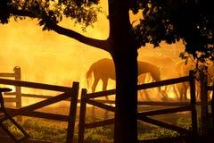 Ranch dei cavalli Fotografia Stock