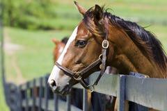 Ranch del cavallo Fotografia Stock Libera da Diritti