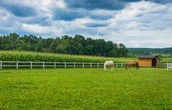 Ranch del cavallo Fotografia Stock