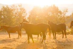 Ranch del gregge del cavallo Fotografie Stock