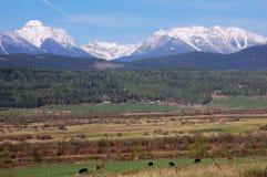 Ranch della collina pedemontana Immagine Stock
