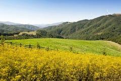 Ranch della Corea Samyang Immagini Stock Libere da Diritti