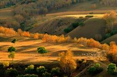 ranch della foresta Fotografie Stock Libere da Diritti