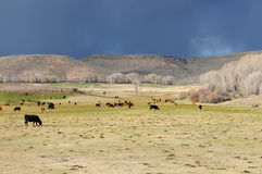 Ranch di bestiame della montagna Immagini Stock Libere da Diritti