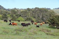 Ranch di bestiame di California Immagine Stock