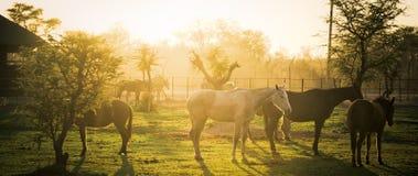 Ranch di primo mattino Fotografia Stock