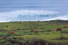 Ranch durch das Meer Stockbilder