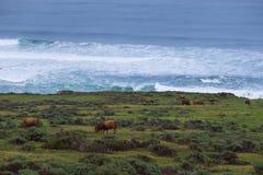 Ranch durch das Meer Lizenzfreie Stockfotografie