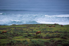 Ranch durch das Meer Lizenzfreies Stockbild