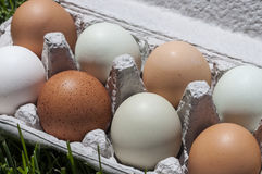 Ranch eggs Royalty Free Stock Photo