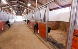 Ranch equestre del recinto chiuso animale di sport del granaio di cavallo che corre stalla Immagini Stock