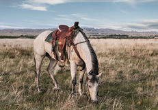 Ranch Horse Grazes in the Badlands royalty free stock images