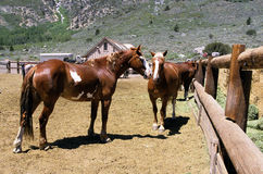 Ranch Horses. View of horses in a Paddock Royalty Free Stock Image