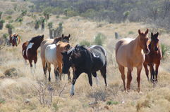 Ranch Horses Royalty Free Stock Photo