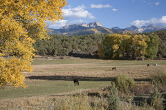 Ranch and horses with Chimney Peak Royalty Free Stock Photos