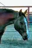 Ranch horses Royalty Free Stock Photography