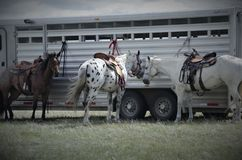 Ranch horses waiting for riders stock photos