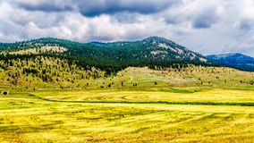 Ranch Land in the Nicola Valley in British Columbia, Canada. Ranch Land in the Nicola Valley along Highway 5A between Merritt and Kamloops, British Columbia stock photography