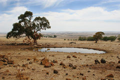 Ranch Landscape Southern Australia. A typical ranch scenic view illustrating sheep grazing, drinking pond and vast landscape panorama in Victoria, southern Royalty Free Stock Photos