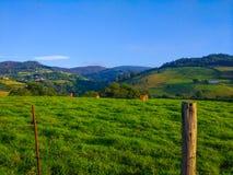 Ranch mit weidenden Kühen und Berge den am Hintergrund lizenzfreies stockbild