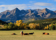 Ranch in the Mountains. Horses lounge in a field at the base of the San Juan Mountains of Colorado stock images