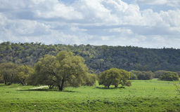 Free Ranch Pasture In The Texas Hill Country On A Sunny Afternoon Stock Images - 53312834