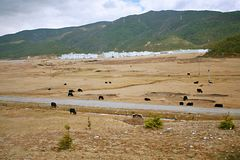 Shangri-La. The ranch and residence of the Tibetans in Shangri-La, Yunnan Royalty Free Stock Images