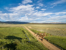 Ranch road and cattle Stock Photo